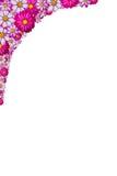 hörnblommor som inramniner pink Royaltyfria Bilder