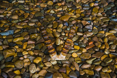 Hörner von den Bergschafen, die auf den Felsen liegen Stockfotos