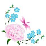 Hörnet med blått glömmer mig inte blommor och en rosa pion med en slända Arkivbilder