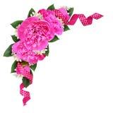 Hörngarnering med rosa pionblommor och siden- prickig ribbo Royaltyfria Bilder