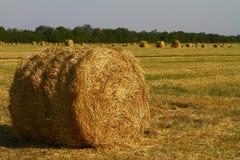 Hörulle på fältet på hösten på plockningtid Royaltyfria Foton