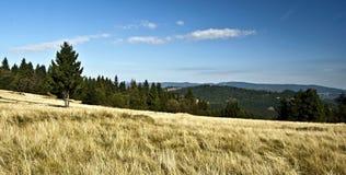 Höstäng med det isolerade trädet och panorama av bergskedjor i Javorniky berg Royaltyfri Foto