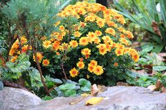 Höst andedräkt, blommor, glädje, skönhet Arkivbilder