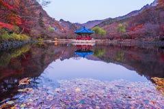 Höst av den Naejangsan nationalparken, Sydkorea Arkivfoto