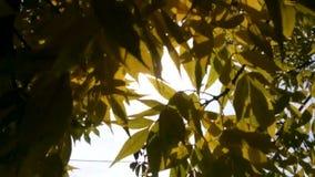 Höst, blad, träd, gult, sol, ljus, säsonger, ljus, liv, bakgrund, autumnal, vacker, natur, glädje, humör, park, färg, arkivfilmer
