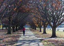 Höst. Burley Griffin Lake. Canberra. Australien Royaltyfri Bild