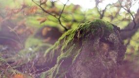 Höst dold värld av bergfantasier Arkivfoton