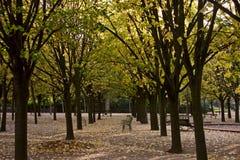 höst du jardin luxembourg Fotografering för Bildbyråer