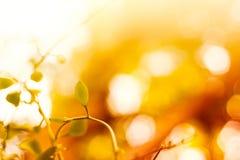 Höst- eller sommarbakgrund med lövverk Arkivfoton