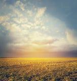 Höst- eller sommarfältlandskap med fantastisk himmel, suddig naturbakgrund royaltyfria foton