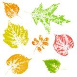 höst färgade imprint isolerade leaves stock illustrationer