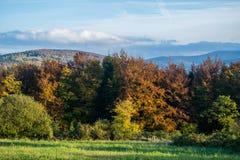 Höst Färgrika träd i skoggränsen Kullar filelds av Co arkivbilder
