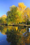 Höst: färgrika träd med vattenreflexioner Arkivbild