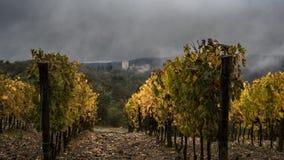 Höst för vingårdar för Vertine ` s Arkivfoto