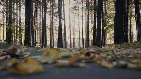 Höst Fallande gula sidor för skog av träd lager videofilmer