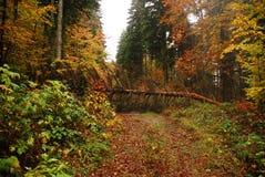 höst fallen tree Arkivbild