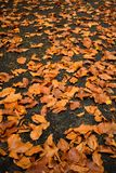 höst fallna jordningsleaves Forest Foliage arkivfoto