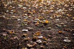 höst fallna leafs royaltyfri foto