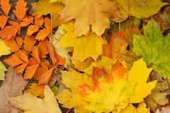 höst fallna leaves Arkivfoto