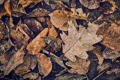 höst fallna leaves royaltyfri foto