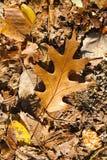höst fallna leaves royaltyfria foton