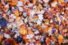 höst fallna leaves royaltyfri bild