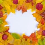 höst fallna leaves Royaltyfri Fotografi
