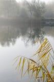Höst flod Fotografering för Bildbyråer