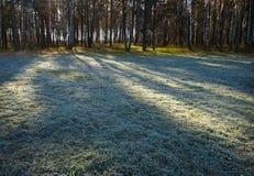 Höst frostigt gräs i morgon arkivbilder