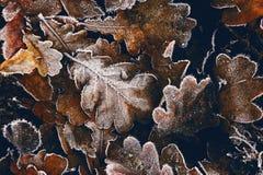 höst fryste leaves fotografering för bildbyråer