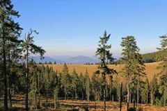 Höst Gorce berg, Polen Arkivbild