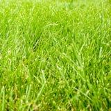 Höst - grönt gräs arkivbilder