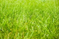 Höst - grönt gräs Royaltyfria Bilder