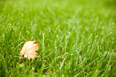 Höst - grönt gräs med ett gult blad arkivfoto