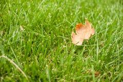 Höst - grönt gräs med ett gult blad royaltyfri foto