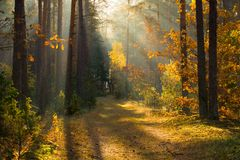 Höst Höstskogskog med solljus Bana i skog till och med träd med livliga färgrika sidor Härlig nedgångbakgrund royaltyfri fotografi
