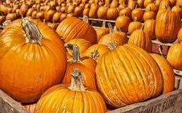 Höst/Halloween 8 Arkivbild