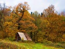 Höst i Abchazien Arkivbild