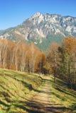 Höst i alpsna Arkivbilder