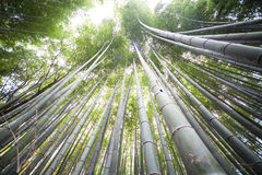 Höst i Arashiyama, Kyoto, Japan Royaltyfri Foto