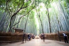 Höst i Arashiyama, Kyoto, Japan Royaltyfri Fotografi