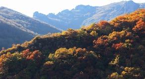Höst i berg Arkivfoton