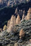 Höst i bergen Arkivfoto