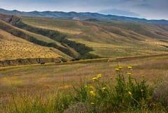 Höst i bergen Fält med höstackar och betaflockar av kor och får royaltyfri bild