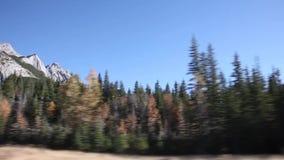 Höst i de kanadensiska steniga bergen lager videofilmer