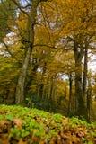 Höst i den Foresta umbraen, Gargano, Apulia, Italien arkivbild