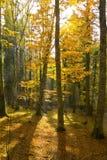 Höst i den Foresta umbraen, Gargano, Apulia, Italien arkivfoton