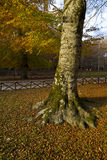 Höst i den Foresta umbraen, Gargano, Italien Royaltyfri Fotografi