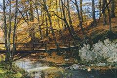 Höst in i den lösa skogen arkivfoto