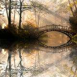Höst i dimmig park Arkivfoton